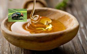 Dacă ar face toate muştele miere, s-ar găsi faguri şi sub coada calului…